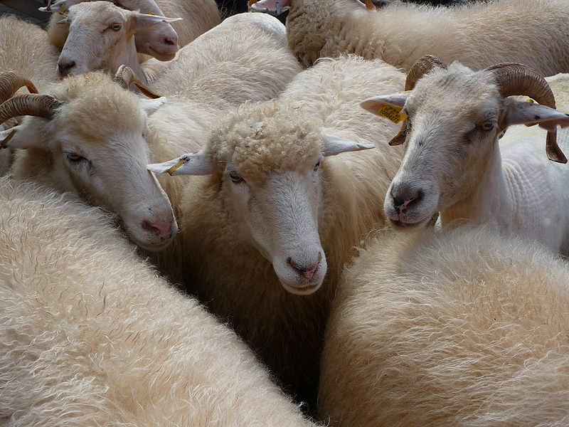 There is more to sleep problems than counting sheep